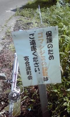 まだ間に合う:奈川のゴマシジミ!